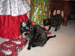 cats-christmas-gifts-tree