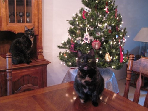 cats-christmas-tree-Santa