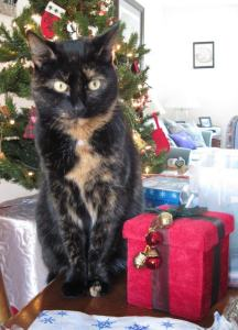 cat-christmas-present