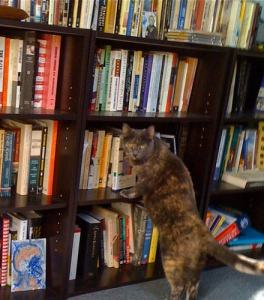 cat-with-books