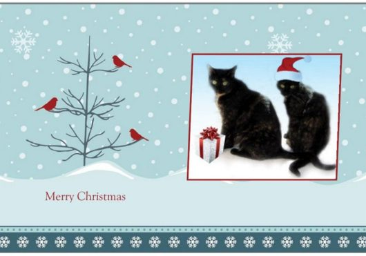 christmas-card-cats-cute