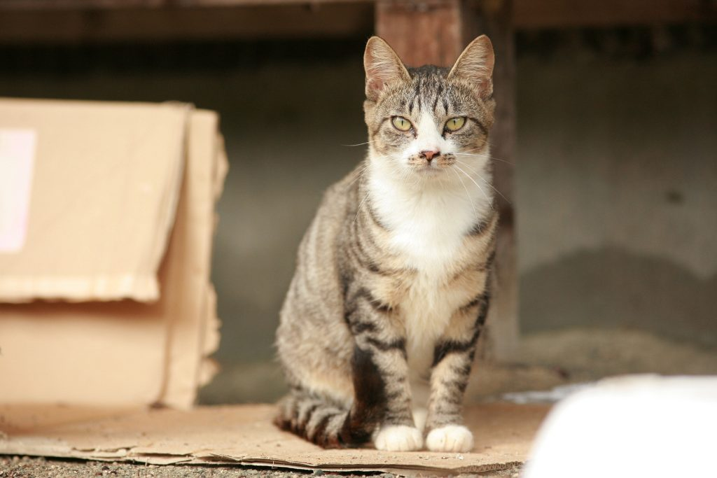 Cats in Japan still need your help