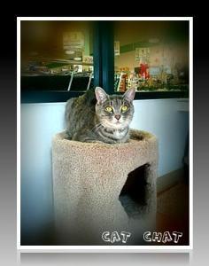 kitty-city-bloomfield-michigan