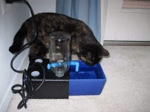 cat-drinking-from-fountain