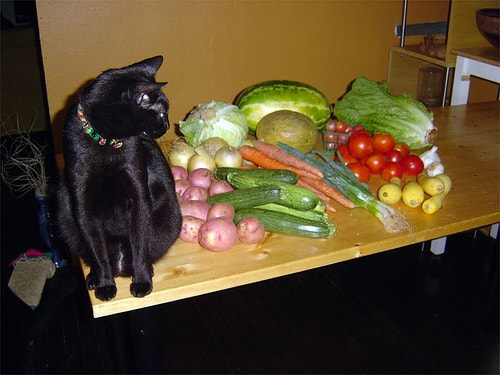 Why Cats Can T Be Vegetarian