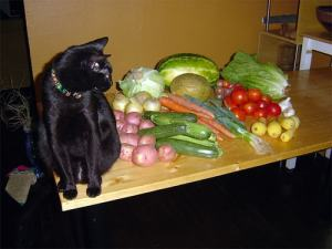 vegan-diet-for-cats