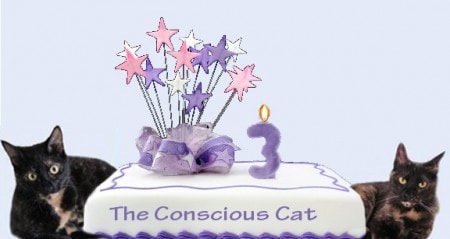 The Conscious Cat blog anniversary