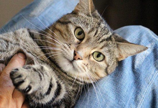 petting-aggression-cats