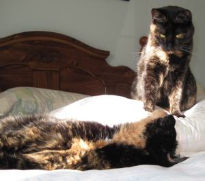 tortoiseshell cats on bed