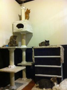 Japan Cat Network group kitty room