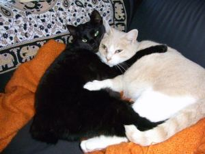 Japan Cat Network rescued cats