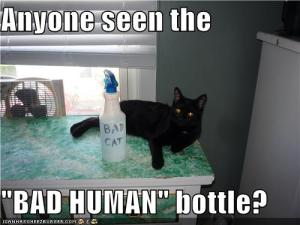 squirt bottles and punishment for cats