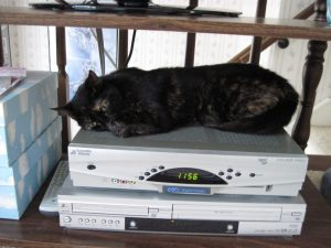 cat_sleeping_on_cable_box