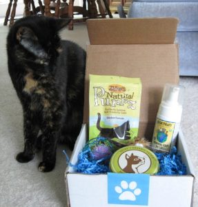 Best_Friend_Box-cats