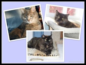 cat_collage_memory