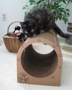 Ruby_catpod_cat_scratcher_furniture
