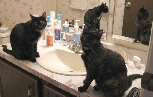 cats_sink_bathroom