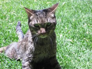 Moki_The_Wobbly_Cat