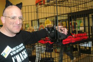 Lost Dog and Cat Rescue Foundation cat adoption