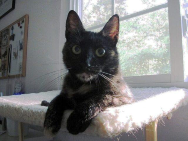 Ruby_cat_window_perch