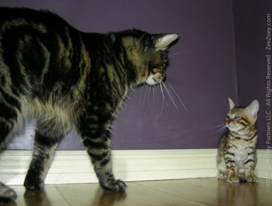 cat_meets_kitten