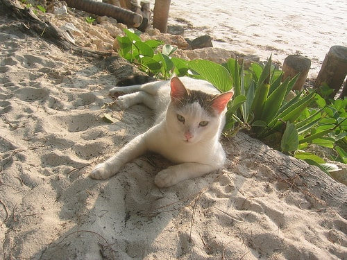 cat_on_beach