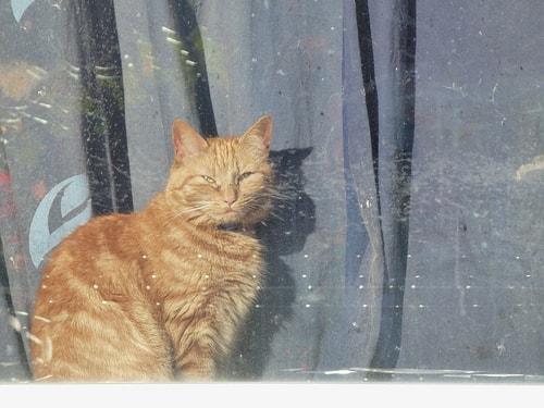 cat_in_window