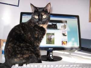 cat_computer_desk