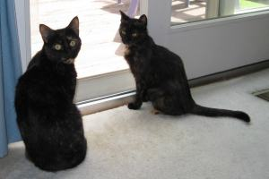 Allegra and Ruby as kitten