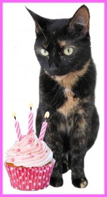 birthday_cat_cupcake
