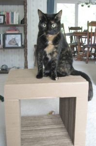 Kittyblock_cat_scratcher