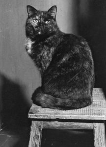 Minette_Julia_Child_cat