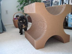 Allegra with X-Tetra Scratcher