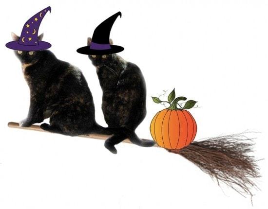 Halloween_cats