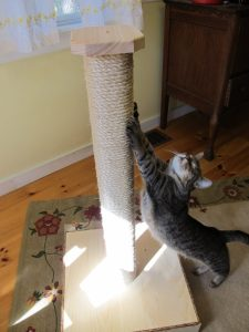 cat_scratching_stretching_post