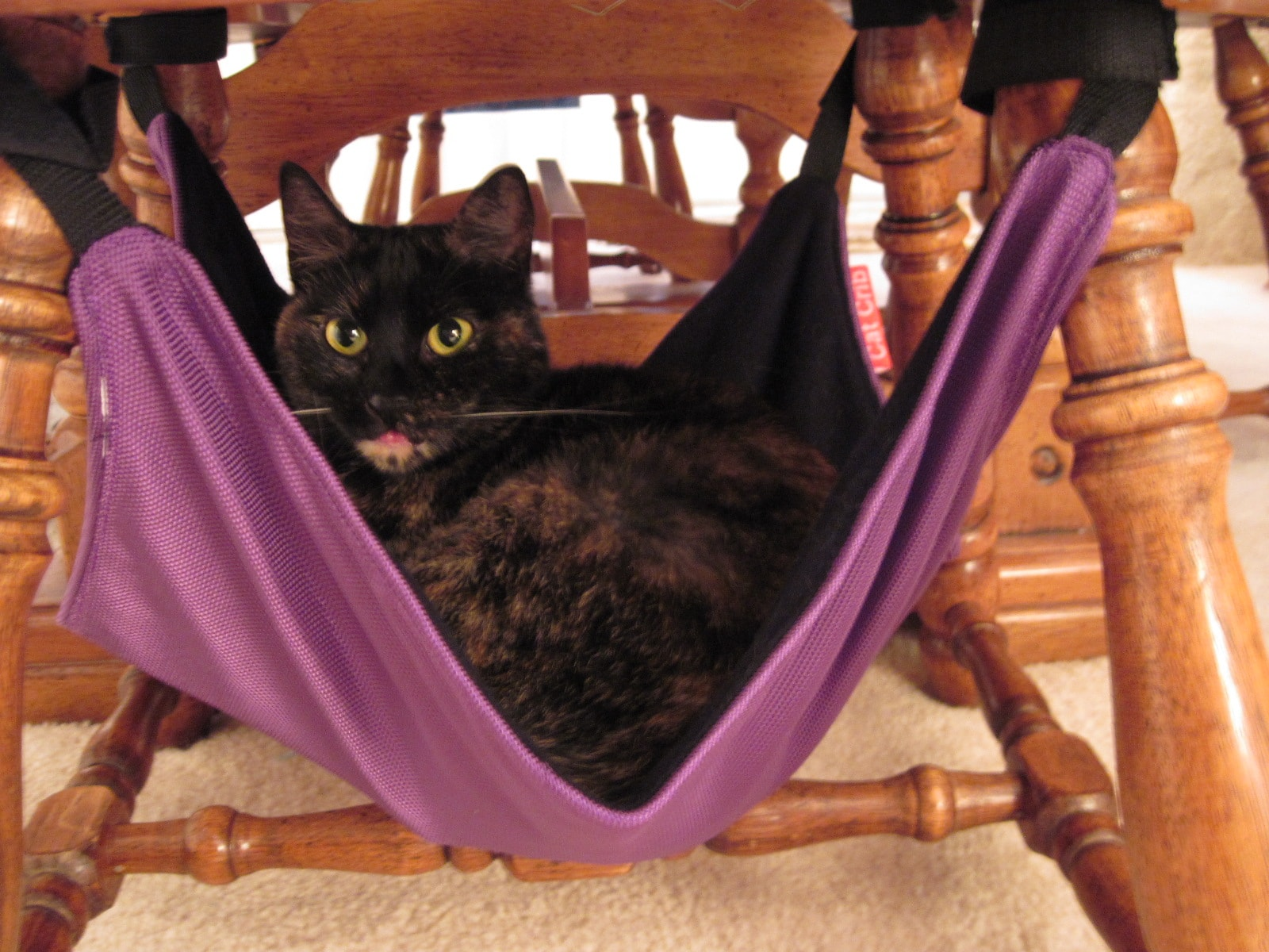 cat hammock under chair louis dining crib winners