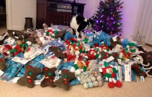 Santa Paws toys for shelter cats