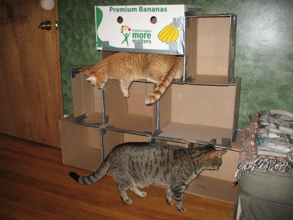 Diy Custom Cat Climbing Wall