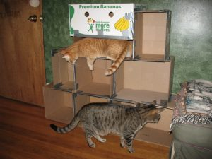 cats_inspecting_boxes