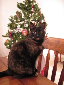 cat_and_christmas_tree