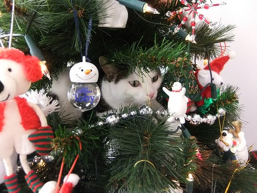 The night before Catmas - the adoption version