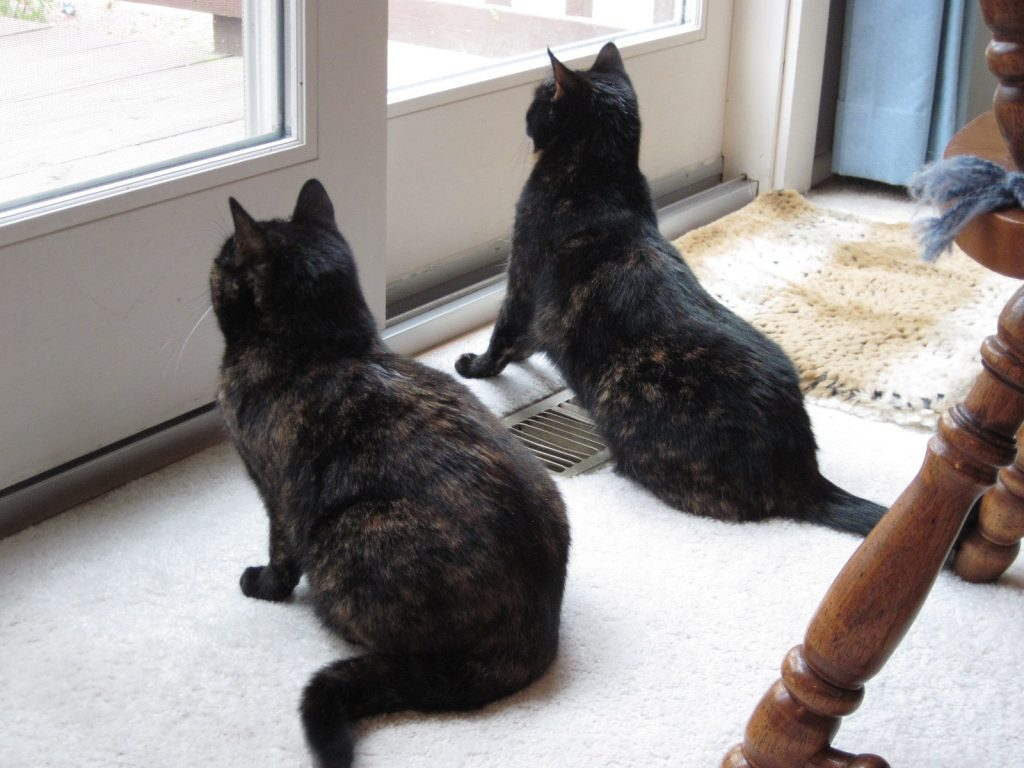 Can Cats and Pet Birds Live Safely Together? - The Conscious Cat