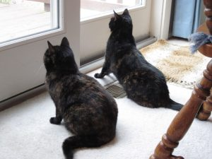 cats_birdwatching