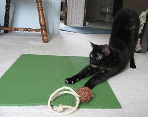 feline_yoga