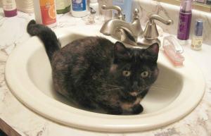 cat_in_sink