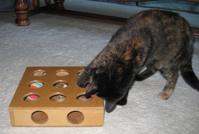 cat_puzzle toy