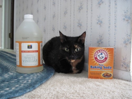pet_friendly_cleaning