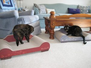 Sleeky_Lounge_cat_scratcher