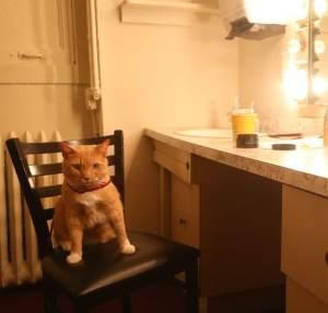 brekfast_at_tiffany's_cat