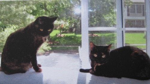 digital_cat_painting